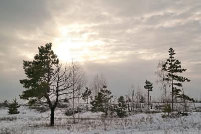 Мастер-класс Снег Воронеж 30 января 2016 от Немодного