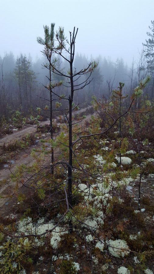 Вот такой лес.