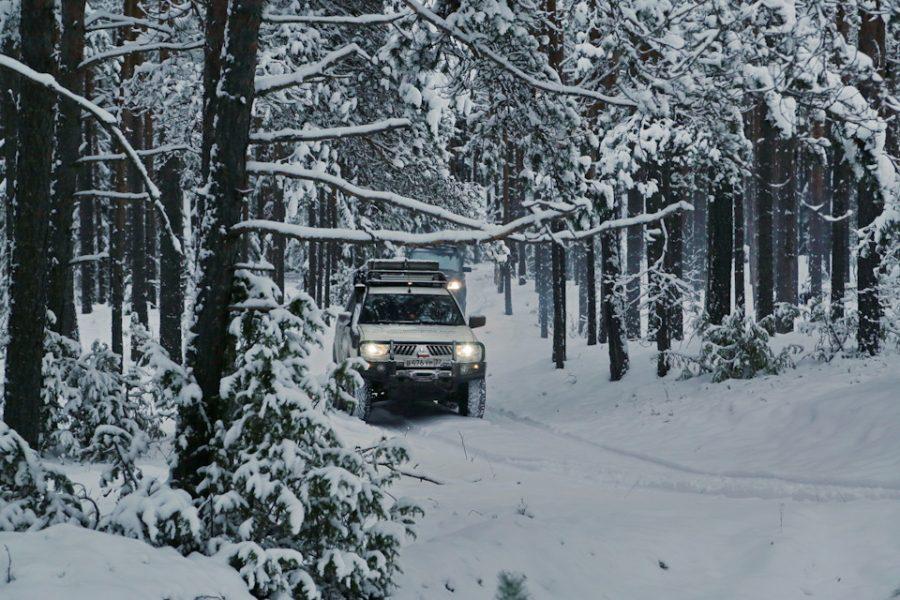 Лучшее место для отдыха — зимний хвойный лес.