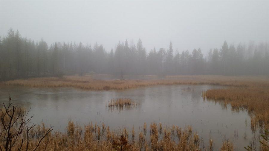 Озеро и болото.